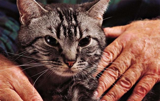Медики назвали пять животных, способных лечить людей