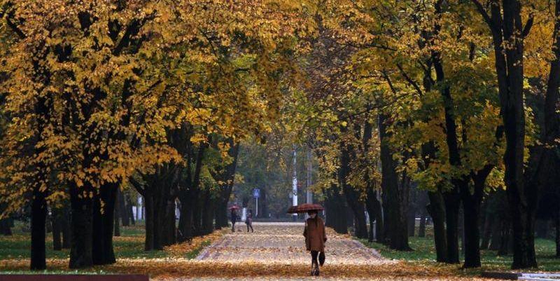 Погода в Украине 31 октября: местами дожди