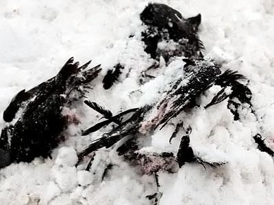 В Турции произошел случай необъяснимой массовой гибели птиц. 777863_400_300_source
