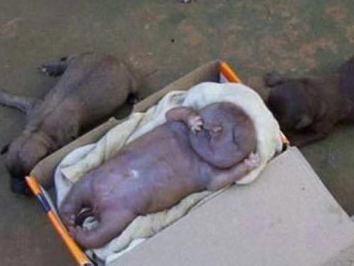 Собака родила человека-мутанта