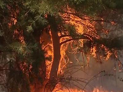 Лесные пожары: не хватает воды – в ход идет взрывчатка