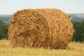 76 тысяч тонн сена и 446 тысяч тонн сенажа заготовлено в республике с начала кормозаготовительной кампании.