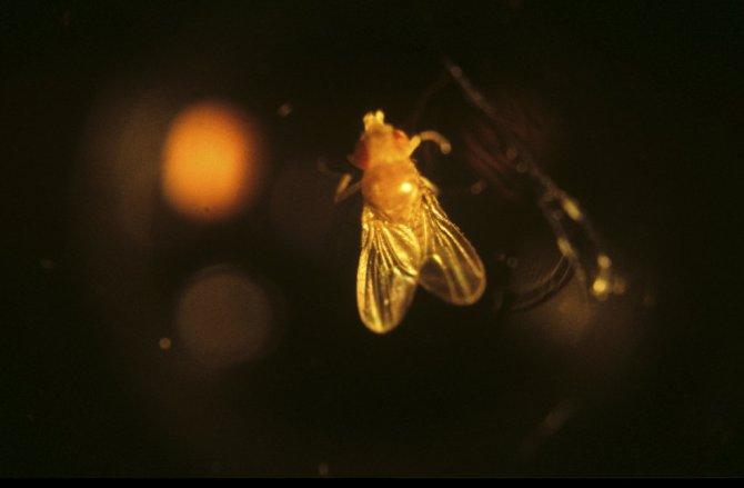 Белок секса насекомых поможет ученым сделать безупречный пестицид.