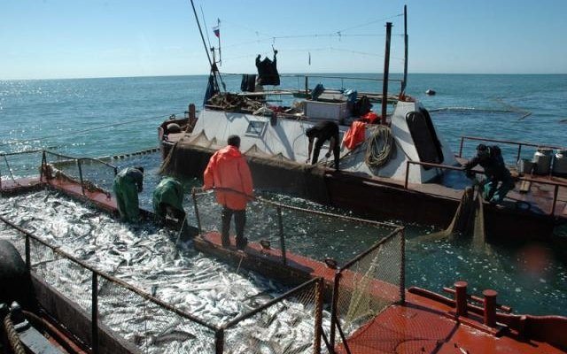 Увеличение квоты на вылов горбуши для рыбаков на 100 тонн стало большим плюсом для промышленников