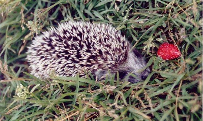 Список животных и растений занесенных